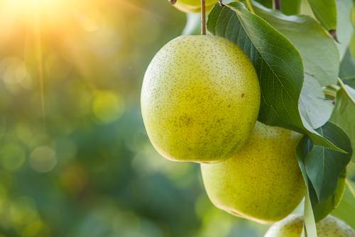 De lekkerste fruitbomen koopt u bij tuincentrum van de Lagemaat in Ede!