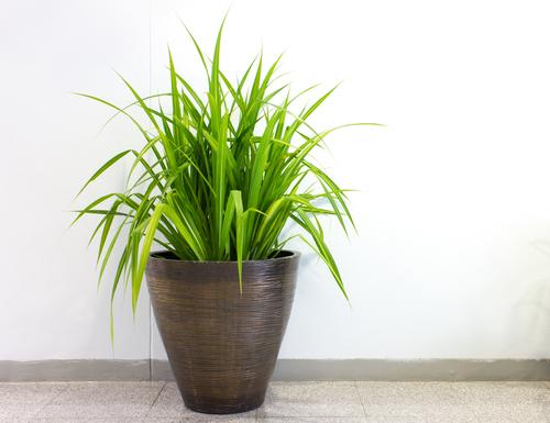Grote kamerplanten kopen in harskamp tuincentrum van de for Grote kamerplanten