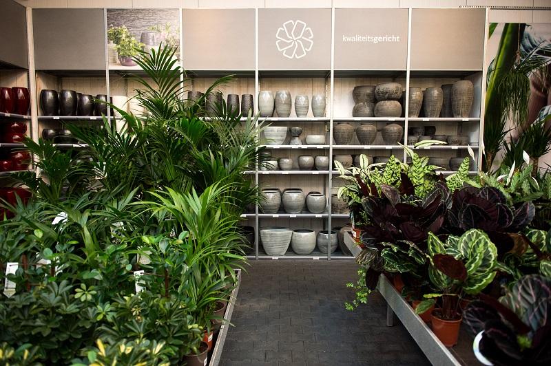 De mooiste grote kamerplanten koopt u bij Tuincentrum van de Lagemaat nabij Harskamp!